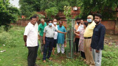 Photo of लायंस क्लब जमालपुर आदर्श के द्वारा किया गया वृक्षारोपण